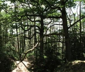 7-Im Wald_III_40x47cm