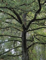 3 Baum_I_25x20cm